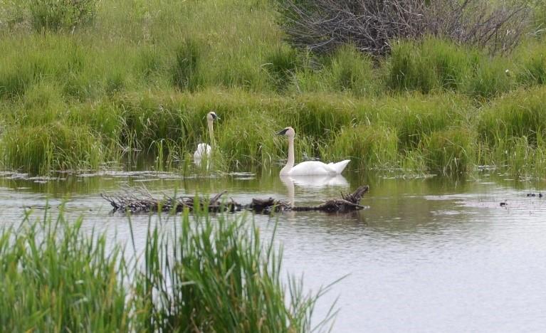 Photos of Joe Ricketts Swan Project